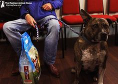 Our Animal Welfare Officers attended a homeless event in Shoreditch to help the homeless with their dogs. This lovely pooch is Paddy, who received free health checks including flea and worming treatment and even got his paws on a free bag of food! Please share to support the work our Animal Welfare Officers do for the homeless! https://themayhew.org/about/local-community-work/working-with-the-homeless/