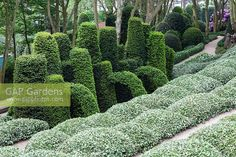 Sculpted Elaeagnus x... stock photo by Charles Hawes, Image: 1267864 Sculpting, Stock Photos, Image, Outdoor, Outdoors, Sculpture, Sculptures, Outdoor Games, The Great Outdoors