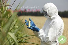 How to Get Glyphosate Off Your Plate - http://www.mommygreenest.com/how-to-get-glyphosate-off-your-plate/