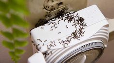 Home Remedy: The Natural Way to Kill Ants Fee Du Logis, Vegetable Garden Design, Gifts For Photographers, Life Savers, Home Hacks, Pest Control, Taking Pictures, Clean House, Good To Know