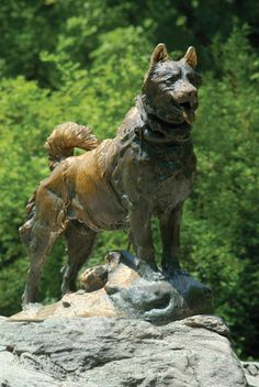 Balto the sled dog. Central Park , NYC. On February 2, 1925, Gunner Kaassen drove his heroic dog team into the streets of Nome. In the lead of his team was a husky named Balto, whose furry face soon became known around the world. A year later, in honor of the epic trek, admirers erected a statue of Balto in New York City's Central Park