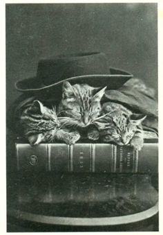 'Books, Cats, Life is Good.' (Edward Gorey)  Photo: Time for Bed by H Pointer, 1870. Crazy Cat Lady, Crazy Cats, Foto Fantasy, Kinds Of Cats, White Cats, Vintage Cat, Vintage Black, Cat Love, Cat Art