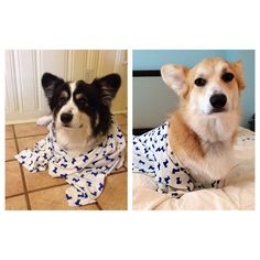 Our Lunch Date Top in Corgis... on corgis!