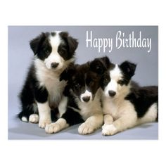 Need Border Collie Birthday postage to help send that card on its way? Description from zazzle.com. I searched for this on bing.com/images