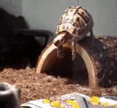 25 adorable new animal gifs that will surely make you smile 20