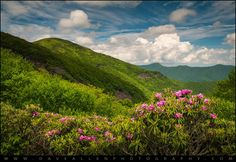 Craggy Gardens Rhododendron Bloom - © 2014 Dave Allen Photography, All Rights Reserved. More at http://www.daveallenphotography.com/