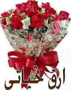 - The social network for meeting new people Good Morning Arabic, Good Morning Roses, Good Morning Gif, Good Morning Greetings, Christmas Tree Decorations, Christmas Wreaths, Holiday Decor, Dove Pictures, Bubbles Wallpaper