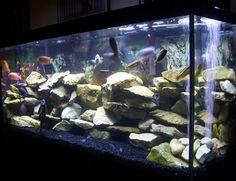 Best Cichlid Tank Setup - Bing Images