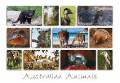 Australian Animals PC168