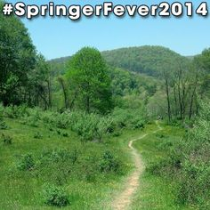 #SpringerFever2014 #AppalachianTrail #Trail #AT #BackpackingAT #Backpacking #Hiking #Latergram #NoFilter #Green