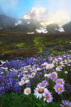 Mount Ranier, #Washington