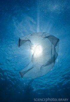 Is that a jellyfish or a plastic bag?  from http://www.sciencephoto.com/image/446304/large/C0122716-Plastic_bag_in_the_ocean-SPL.jpg