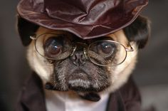 Steampunk pug with spectacles & hat
