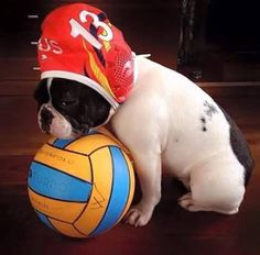 This ball is mine Usa Water Polo, Waterpolo, Splash Zone, Woodland Park Zoo, French Bulldog, Soccer, Swimming, Banquet, Bulldogs