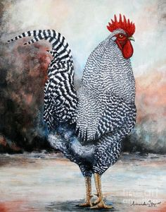 Barred Rock Rooster Art Print by Amanda Hukill. All prints are professionally printed, packaged, and shipped within 3 - 4 business days. Choose from multiple sizes and hundreds of frame and mat options. More farmhouse pillow covers at The Swanky Rooster. Best Egg Laying Chickens, Fancy Chickens, Chickens And Roosters, Raising Chickens, Chickens Backyard, Rooster Painting, Rooster Art, Hen Chicken, Chicken Art