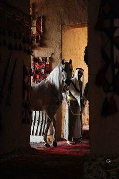 Saudi Arabia Culture, Phone Wallpaper Pink, Cutting Horses, Beautiful Arabian Horses, Akhal Teke, Horse Photography, Wedding Photography, Head Shapes, Old Paintings