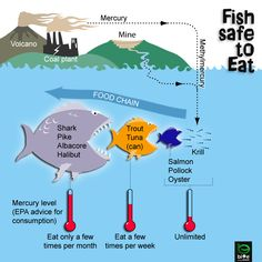 Oceanography: Mercury in Fish Toxins in the food chain