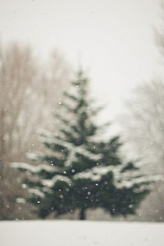 blurry picture of a tree with snow!