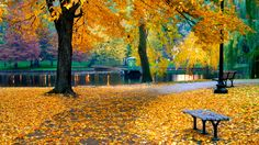 The Boston Public Garden is awash with color during the crisp fall months.