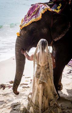 Mujer y elefante                                                                                                                                                                                 Más