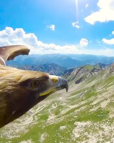 Fly like an eagle with this spectacular footage from a golden eagle soaring over Nebelhorn Peak in #Germany... For more Fantasy videos(video link)...#America #mexico #canada #USA #Austria #Belgium #Denmark #Finland #France #Germany #Hungary #Luxembourg #Iceland #Ireland #Italy #Norway #Poland #Portugal #Monaco #Netherlands #Russia #Spain #Sweden #Switzeland #UnitedKingdom #Bosnia #Herzegovina #Bulgaria #Croatia #Cyprus #CzechRepublic #Estonia #Georgia #Greece #Kazakhstan #Latvia #india… Videos Video, Video Link, Internet Trends, Golden Eagle, Bosnia, Luxembourg, European Fashion, Bird Houses, Eagles