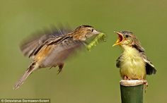 「ムシクイ」の名に納得、かいがいしくヒナにエサを運ぶ母鳥を鮮明にとらえた美麗な写真 - GIGAZINE