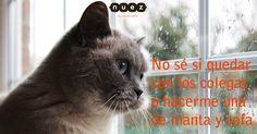 Y tú, ¿qué vas a hacer? ¡Buenas noches :-)! #frases #humor #gatos