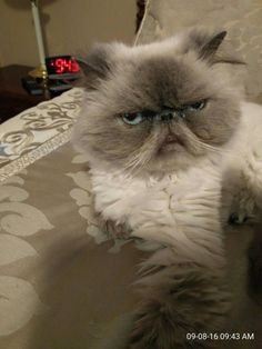 This cat is you every single time your alarm goes off.   28 Times Cats Knew What It Was Like To Be You