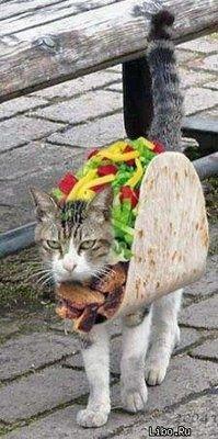 À l'occasion d'Halloween, les amoureux des chats n'auront plus aucune limite à l'inventivité et à l'outrance.Vous allez vite vous en rendre compte ici, nos amis à quatre pattes en voien...