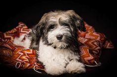 Hundfotografering av liten tuss