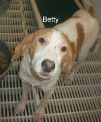Betty has been adopted! Betty was seized is an adoptable Hound Dog in Elizabethown, NC. Betty and 3 other hounds were seized due to no food, no water, and poor conditions. Betty needs to get out of the shelter and become som...