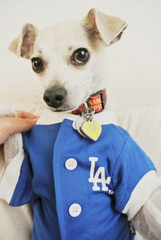 MLB Jersey for Dogs <3