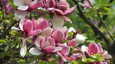 Spring Flowers Background | Spring Flowers Desktop Backgrounds