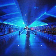Manchester Airport (MAN) Manchester Airport, International Airport, Best Dogs