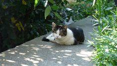 キジトラ白模様の猫(505)猫写真-横浜