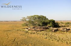 Shumba Camp is located in the centre of the Busanga Plains, home to hundreds of red lechwe, ubiquitous puku, stately roan and the diminutive oribi.