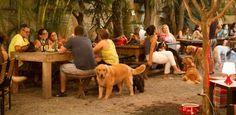 Espaço cria festa de Réveillon para donos e cachorros comemorarem juntos