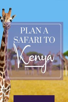 Dreaming of seeing the Great Migration? Elephants and lions in the wild? Here's what you need to know about planning a safari to Kenya! Plan A, How To Plan, The Great Migration, Wild Lion, Kenya Travel, Air Balloon Rides, Baboon, Tourist Places, Long Haul