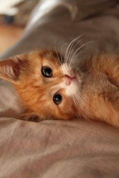 Oh my heart! cute kitten