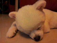 I'm  so  tired!!!