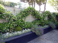 Formeel tuinontwerp van Hedge Garden Design in Wellington Vegetable Planting Guide, Planting Vegetables, Back Gardens, Small Gardens, Narrow Garden, Formal Gardens, Garden Structures, Outdoor Plants, Garden Plants