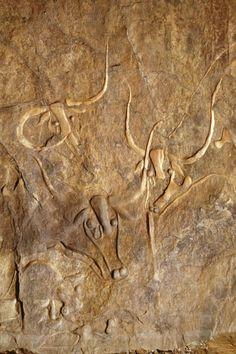 Polished cattle engravings, Tegharghart, Tassili n'Ajjer, Algeria Art Rupestre, Art Ancien, Aboriginal Art, Ancient Artifacts, Stone Art, Ancient History, Rock Art, Archaeology, Art Images