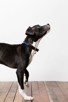 Found My Animal is a Brooklyn-based brand of accessories for adopted animals and their people. A fellow B Corporation, Found uses their business to encourage animal adoption. All the dogs featured in