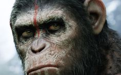 Dawn of the Planet of the Apes Movie HD desktop wallpaper