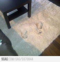 Stealth Level...Expert (If he wasn't sleeping)