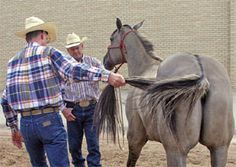 http://americashorsedaily.com/epm-symptoms-in-horses/#.VNkbLXYqqFG   epm-report1