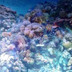 #great#barrier#reef#greatbarrierreef#asisi#panometer#korallen#korallenriff#lila#blau#wunderschön#leipzig#kalt#bunt#fische#australien#taucher#yadegarasisipanorama by p.o.f.f.x.v http://ift.tt/1UokkV2
