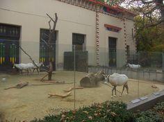 Oryx house