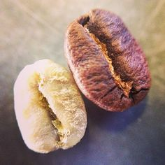 A coffee bean, before and after roasting. #guatemala