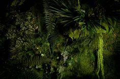 Strona główna - Everlasting Flowers - zielone ściany z mchu i roślin stabilizowanych